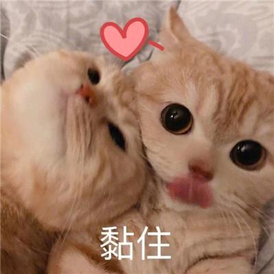 炒鸡甜的猫咪撒娇表情包合集大全