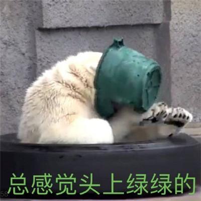 超级有趣的狗子恶搞表情包 总感觉头上绿绿的