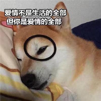 狗狗土味情话表情撩人的表情大全