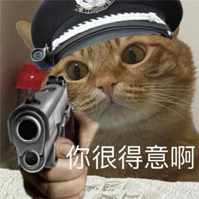 小猫咪警察搞笑表情包大全大全-云奇网