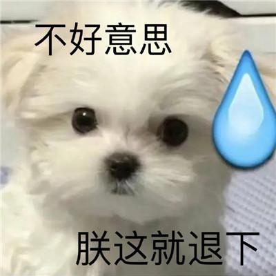 一组狗狗超级爆笑沙雕表情包大全