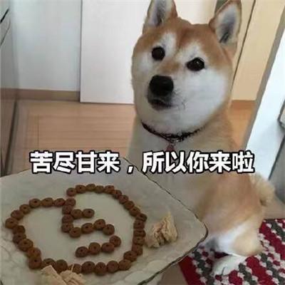 狗狗土味情话表情撩人的表情 很甜满满套路的聊天表情合集