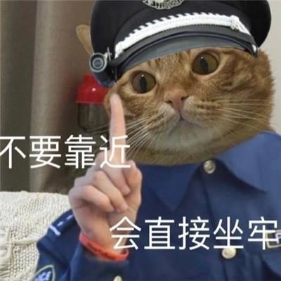 小猫咪警察搞笑表情包大全 不要靠近直接会坐牢