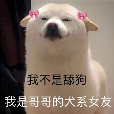 一组狗狗超级爆笑沙雕表情包 我不是舔狗我是哥哥犬系女友
