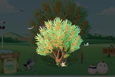 蚂蚁森林沙棘树装扮怎么获得?蚂蚁森林限定沙棘果树装扮获取方法步骤