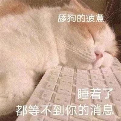 新版超级酷的可爱猫猫表情包大全