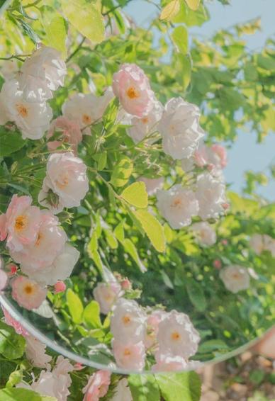 好看的让心情变的花花壁纸 唯美心情很棒的鲜花壁纸