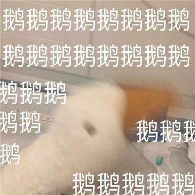 2021超级可爱的笨笨鹅表情包合集大全-云奇网