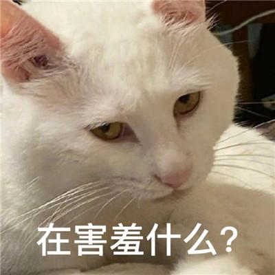 最新版油腻猫咪表情包大全大全-云奇网