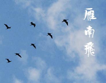 大雁南飞的唯美句子大全-云奇网
