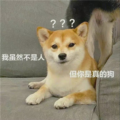 让人爆笑的沙雕表情最新_我虽然不是你是真的狗