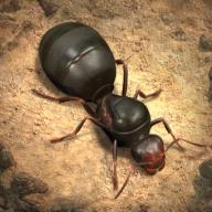 蚂蚁王国手游v1.0.0.6 安卓版