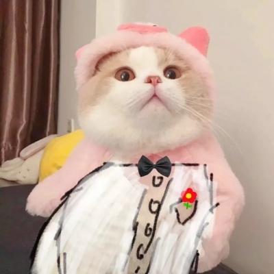2021最新版很个性超级萌的猫头像 与其追星星不如成为星星一样的人